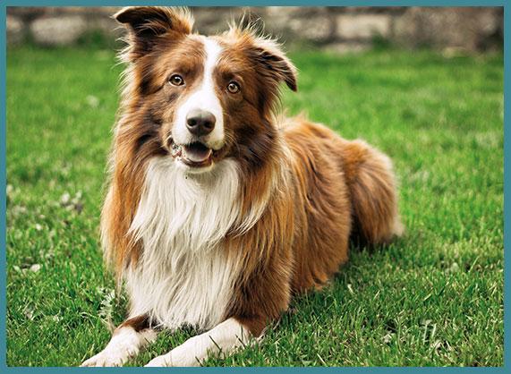 Orange county artificial turf dog runs